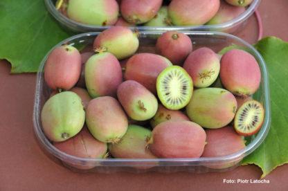 kiwiri kiwibeere Bingo kiwiberry